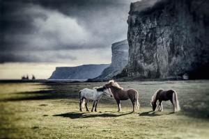 Island_Iceland_Pferde_Harry_Koester_Fotograf_Oldenburg