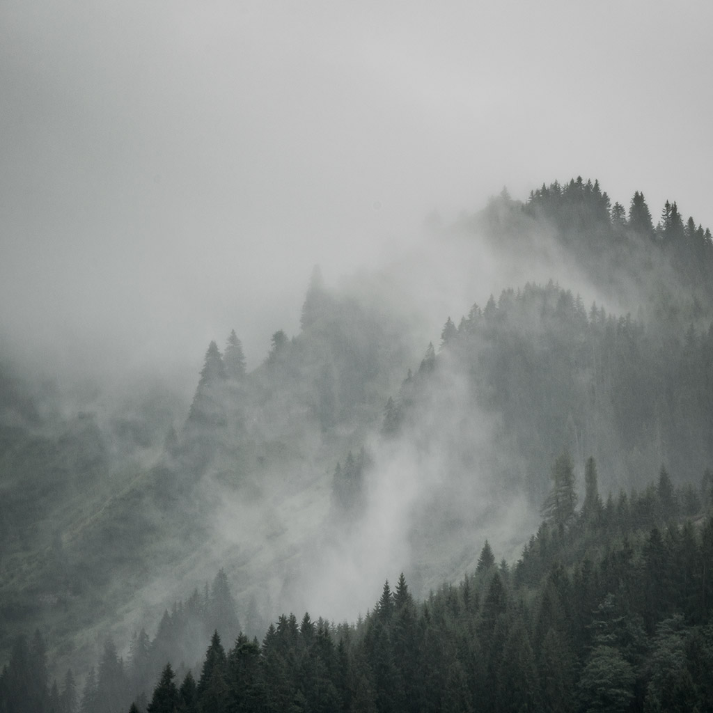 Harry_Koester_Fotografie_Foggy_Woods_Landscape_02